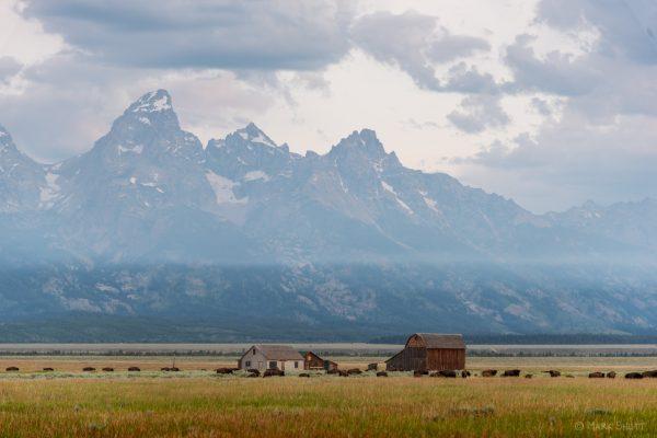 Barns and Buffalo on a smoky Teton morning